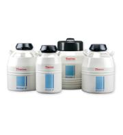液体窒素で幹細胞を保存