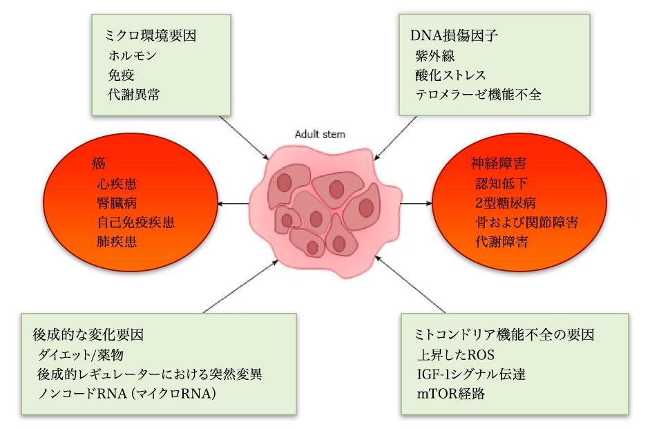 多能性幹細胞