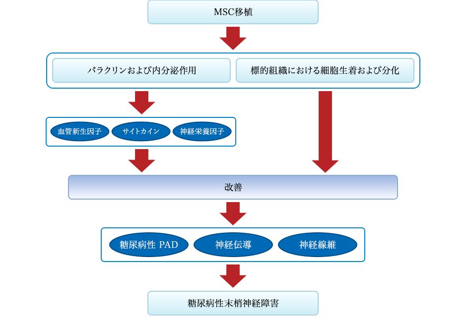 MSC移植