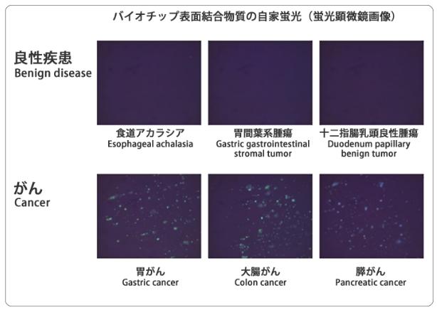 蛍光顕微鏡画像